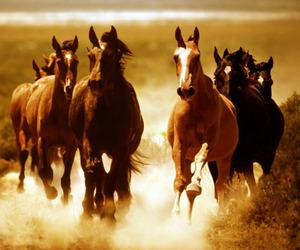 amazing and horses image
