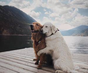 dog, animal, and hug image