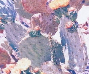 aesthetic, blueish, and cactus image