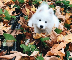 dog, fall, and fluffy image