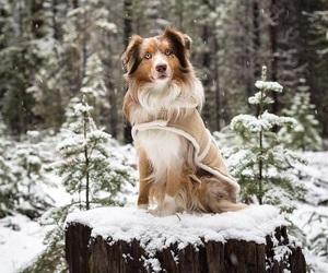 animal, dog, and snow image