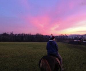 beautiful, november, and pferde image
