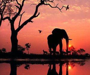 elephant, sunset, and nature image