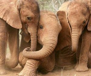 elephant, animals, and cute image