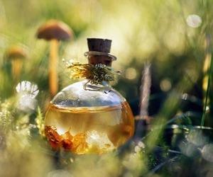 nature, magic, and potion image