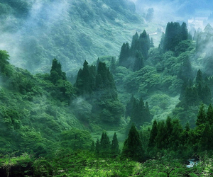 nature, green, and tree image