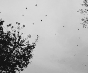 autumn, black and white, and Flying image