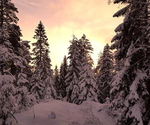 christmas, light, and nature image