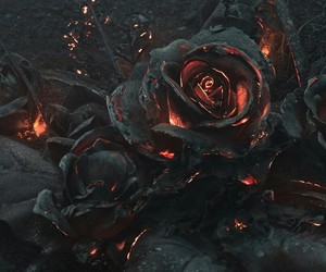 rose, fire, and black image