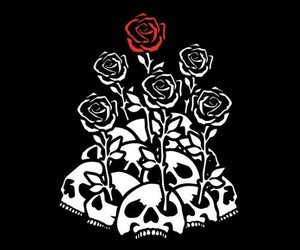 black and roses image