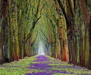 belleza, camino, and paisaje image