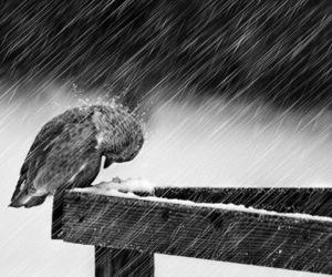 bird, rain, and alone image