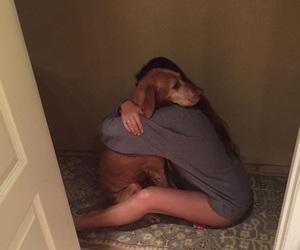 animal, closet, and dog image