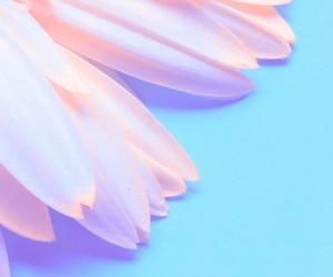 background, luxury, and pastel image