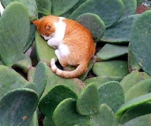 cat, cactus, and green image