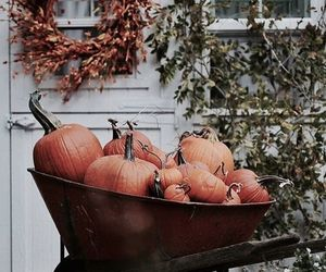 autumn, pumpkins, and tumblr image