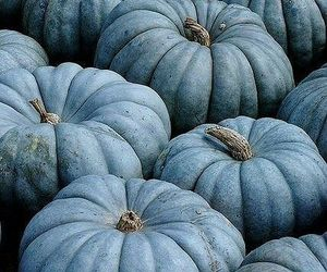blue, pumpkin, and autumn image