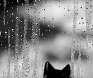 cat and rain image