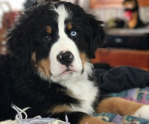 animals, puppies, and dogs image