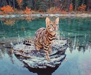 animals, blue, and eyes image