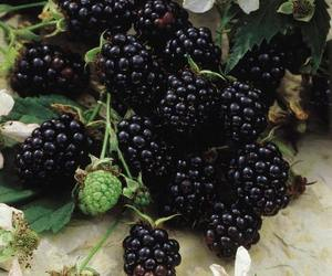 fruit, blackberry, and berries image