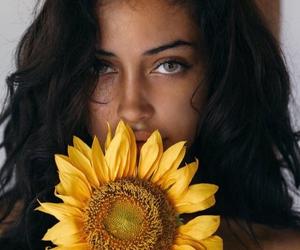 beautiful, sun flower, and beauty image