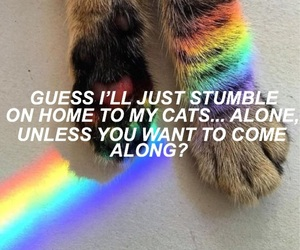 aesthetic, animals, and cats image