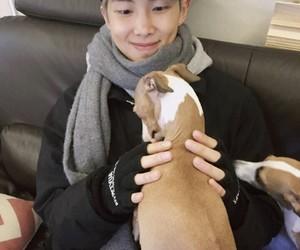 dog, cute, and bangtan image