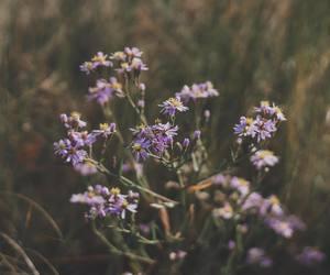 autumn, boho, and california image