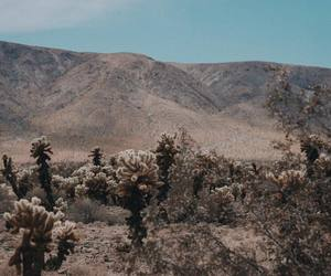 cacti, garden, and travel image