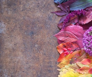 colors, flowers, and leaves image