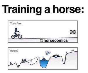 horses, so true, and training image