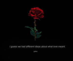 quotes, rose, and love image