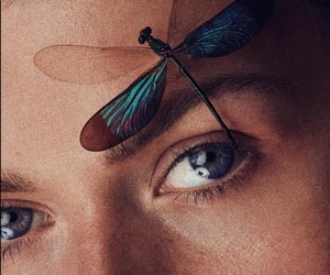 dragonfly, eyes, and face image