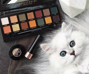 cat and makeup image