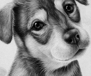 dog, art, and drawing image