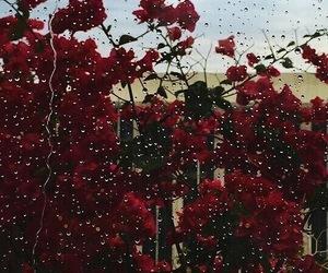 flowers, rain, and rose image