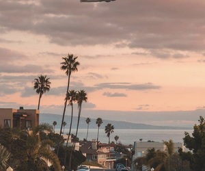 airplane, palm trees, and sky image