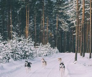 winter, snow, and dog image