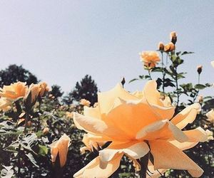 flowers, nature, and orange image