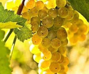 grape, yellow, and inspiration image