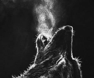 animal, black, and wolf image