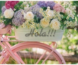 hola and primavera image