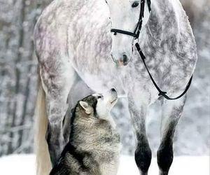 horse, animal, and dog image