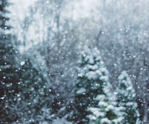 background, snow, and trees image
