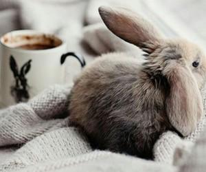 bunny, coffee, and christmas image