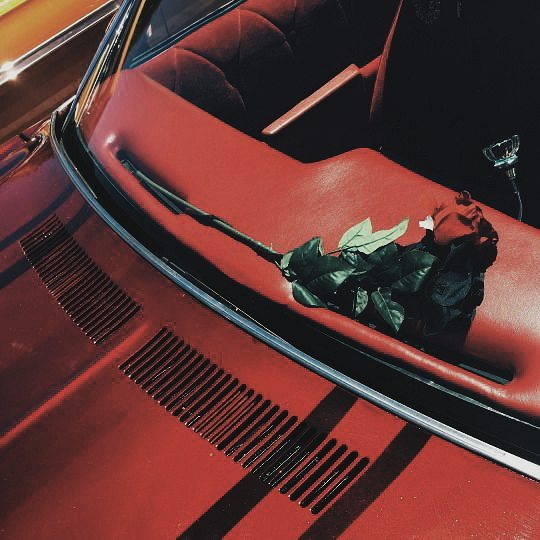 red, rose, and car image