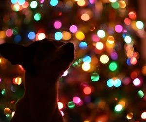 christmas, pretty, and holidays image