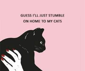 cats, Lyrics, and music image