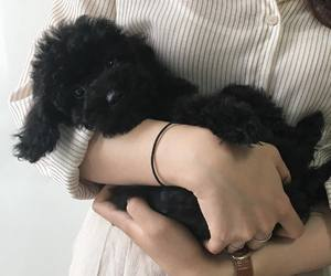 aesthetic, black, and pets image